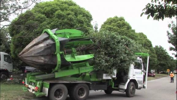 tree relocation van