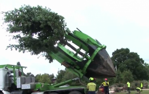 tree moving truck